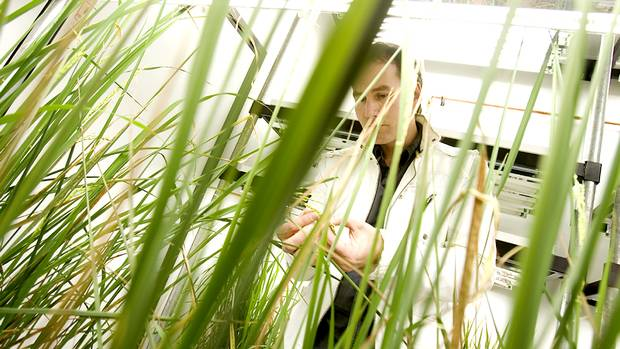 Herbert Kronzucker is a researcher at the University of Toronto's Scarborough Campus who is leading a team of researchers who are trying to help solve the problem of world hunger by developing a type of rice that can thrive in salt water.