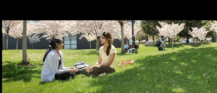 UTSC students sitting under a tree and talking