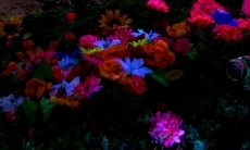Photo of glow in the dark flowers under water.
