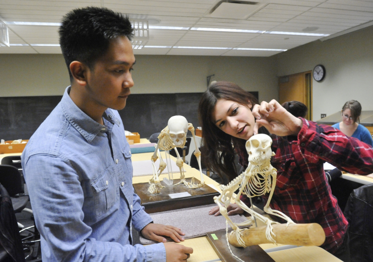 students in anthropology lab