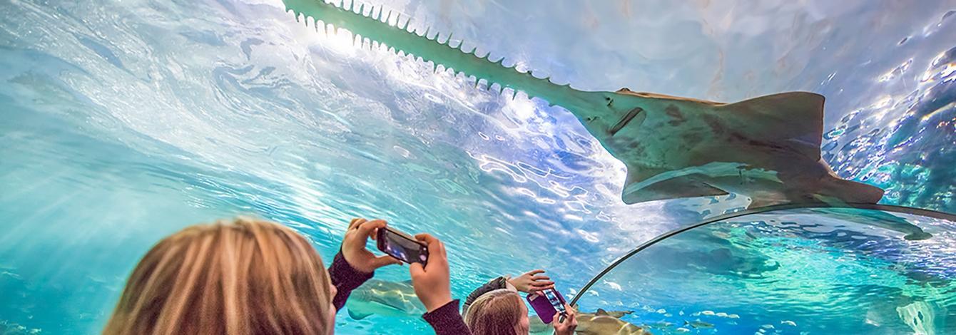 Fish swimming in an aquarium
