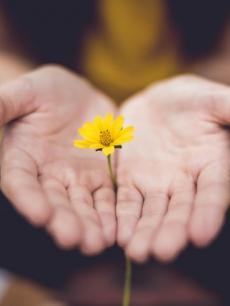 yellow flower in palm of hands