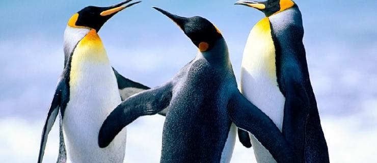 Penguins in a group