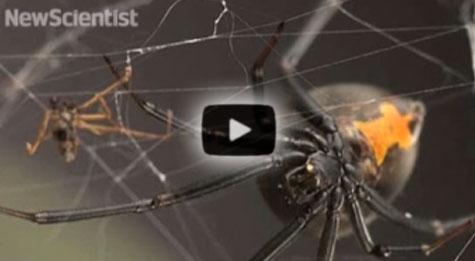 New Scientist video