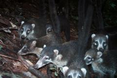 Camera Trapping in Costa Rica