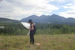 Winter Ticks in Yukon