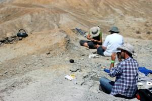 Work at the Dorsey Creek Quarry (Bighorn Basin, Wyoming)