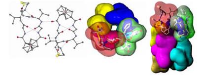Peptide Foldamer