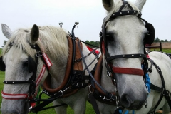 A picture of the beautiful horses