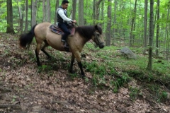 Riding like a pro in the woods