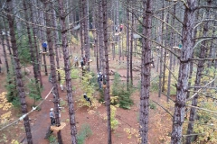 A view from up in the trees