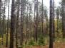 Treetop Trekking Summer 2015